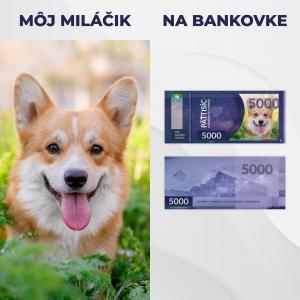 Slovakovka s vlastnou foto – môj domáci miláčik